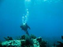 Scuba diving. Shots of scuba diving in the Florida keys Stock Photos
