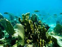 Scuba diving. Shots of scuba diving in the Florida keys Royalty Free Stock Photos