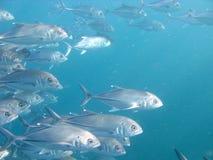 Scuba diving. (ocean life on Bali Royalty Free Stock Photos