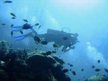 Scuba diving adventure Royalty Free Stock Photos