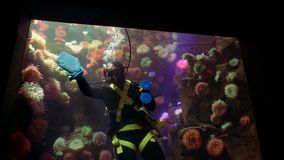 Scuba Diving Aquarium Glass Cleaner Underwater 2. Toronto, Ontario. May 2017 stock video footage