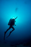 Scuba diving in the Caribbean Stock Photo