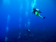 Scuba diving in Caribbean Sea. Scuba diving with guide in place called The Wall in Caribbean Sea royalty free stock photos
