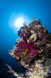 Scuba diving, coral reef, fish, marine life Stock Photos