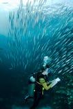 Scuba diving course Royalty Free Stock Photo