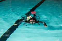 Scuba diving course pool teenager girl with instructor. Goes underwater and holds the inflator hose Royalty Free Stock Photos