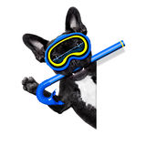 Scuba diving dog Royalty Free Stock Photo