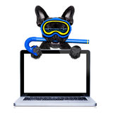 Scuba diving dog Stock Images