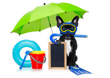 Scuba diving dog Royalty Free Stock Images
