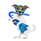 Scuba diving dog. Snorkeling scuba diving jack russell dog with mask and fins , isolated on white background royalty free stock photography