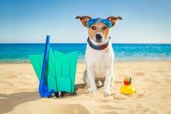 Scuba diving dog Stock Photography