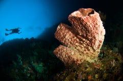 Scuba diving giant sponge bunaken sulawesi indonesia underwater Royalty Free Stock Photo