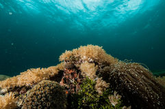 Scuba diving lembeh strait indonesia Royalty Free Stock Image