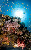 Scuba diving, Lion fish, coral reef, fish, marine life. Colourful coral reef in the red sea in egypt, Dendronephthya, Lion fish Stock Photo