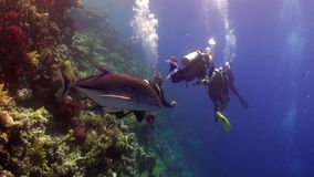 Scuba diving near school of fish in coral reef relax underwater Red sea.