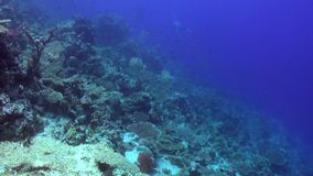 Scuba diving near school of fish in coral reef underwater Red sea. Relax video about marine nature on background of beautiful lagoon stock video footage