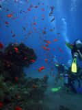Scuba Diving in the Red Sea Royalty Free Stock Photo