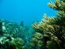 Scuba diving s Royalty Free Stock Photos