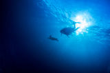 Scuba diving with Sea turtle. Under water Royalty Free Stock Images