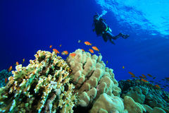 Scuba Diving in tropical seas Stock Photo