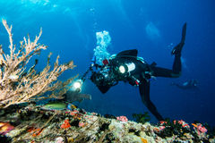 Scuba diving. With underwater camera stock images
