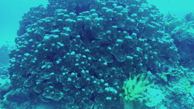 Scuba diving. View of fishes and seaweed. Scuba diving. View from action camera of fishes and seaweed stock footage
