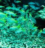 Scuba divings royalty free stock photos