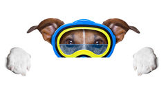Scuba dog Royalty Free Stock Photos