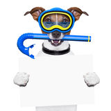 Scuba dog Stock Photo