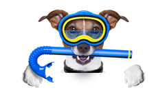 Scuba dog Stock Image