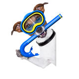 Scuba dog. With snorkel and goggles beside white blank banner or placard stock image