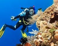Scuba-duiker Royalty-vrije Stock Foto