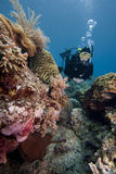 Scuba-duiker die over een tropisch koraalrif zwemt Stock Foto's