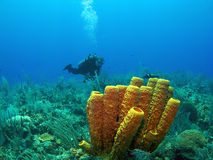 Scuba-duiker en de Gele Spons van de Buis Royalty-vrije Stock Foto's