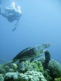 Scuba-duiker en groene overzeese schildpad stock afbeeldingen