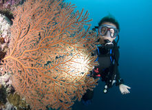 Scuba-duiker en rode overzeese ventilator royalty-vrije stock afbeelding