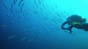 Scuba-duiker met een grote school van barracuda's stock video
