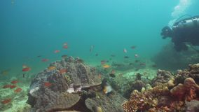 Scuba-duiker Onderwater Filippijnen, Mindoro stock footage