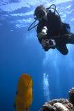 Scuba-duiker - Onderwaterfotograaf stock afbeeldingen