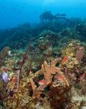 Scuba-duiker op St. Lucia Reef royalty-vrije stock foto's