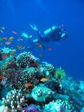 Scuba-duikers door ertsader Stock Afbeeldingen