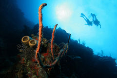 Scuba-duikers en kleurrijke koralen stock foto