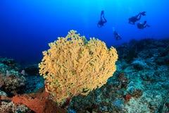 Scuba-duikers en koraal royalty-vrije stock foto
