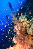 Scuba-duikers en Koraalrif Stock Foto's