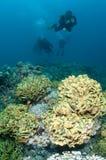 Scuba-duikers over koraalrif Stock Foto