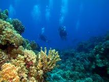 Scuba-duikers returng van een duikvlucht Stock Afbeeldingen
