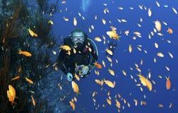 scuba för dykarefiskorange Arkivfoto