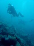 scuba för koralldykarephilippines rev Royaltyfria Foton
