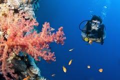 scuba för man för koralldykarefisk Royaltyfria Foton
