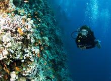 scuba för rev för färgrik dykarekvinnlig foral Royaltyfria Foton